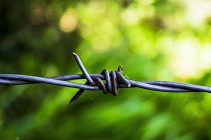 Bible en prison - Paroles de liberté